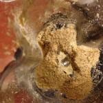 Castañas de cajú molidas
